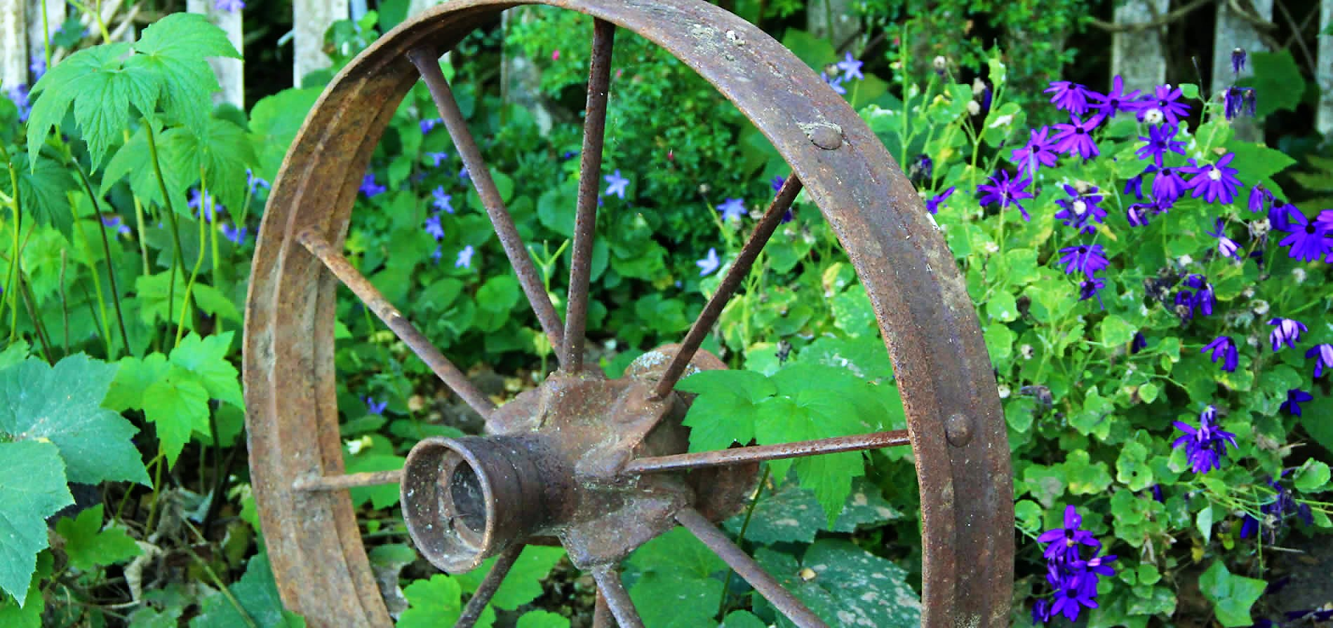 wagon wheel set in plants